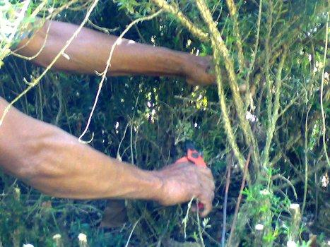 22-07-2009 mengurangi cabang.